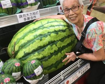 日本巨型西瓜上市 珍宝大西瓜一个卖2千