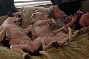 2岁萌娃给狗狗讲睡前故事