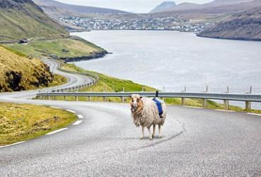 美丽小岛动用绵羊拍谷歌街景图