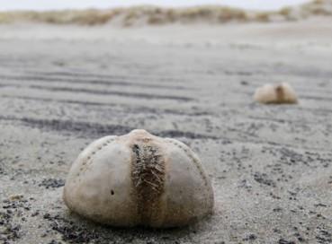英国海岸大量未知生物蛋引发市民恐慌