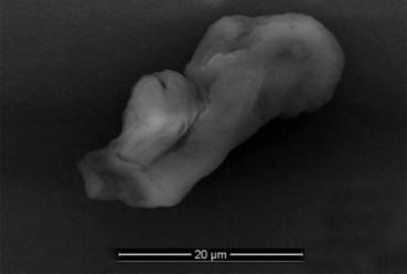 地球边缘发现原始太空生物 或是地球生命起源