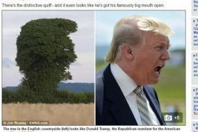 特朗普撞脸大树 难道是天意?