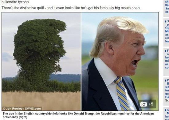 英国乡间出现一棵外型和美国共和党总统大选提名人特朗普侧面十分神似的大树。