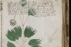 神祕伏尼契手稿将印刷出版 文字无人破解