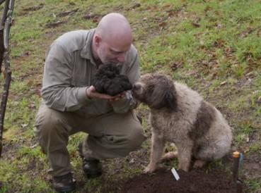 狗狗帮主人找到3斤重世界最大松露