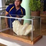 世界最大珍珠重达70斤 价值6.6亿