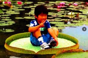 传说中的小孩坐王莲 原来内有玄机