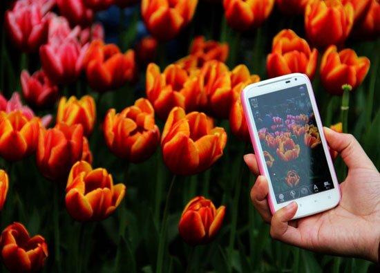 见花不知名?微软深度学习一键识别25万种花朵