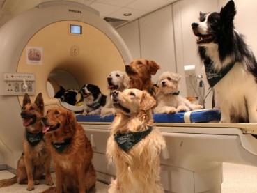 研究证明狗狗真能听懂人话
