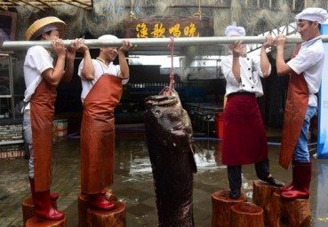 海南捕获特大龙胆石斑鱼让渔民都惊呆了