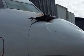 飞机空中撞鸟现场惨烈