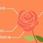 用这个App能帮你认出25万种花儿