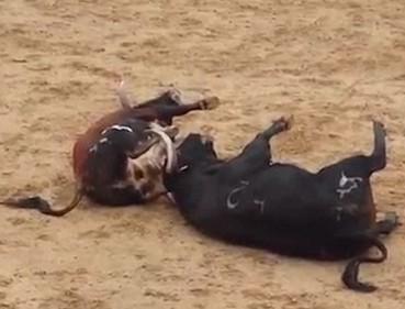 西班牙两斗牛高速对撞当场死亡