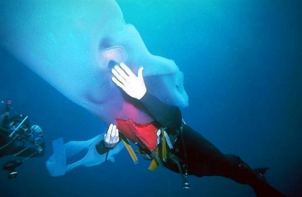 """潜水者海底遇到""""透明巨虫"""":回家一查惊呆-趣闻巴士"""