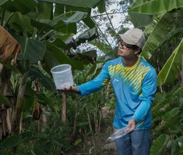 让蚊子绝后!蚊子工厂每周放出2百万带菌雄蚊