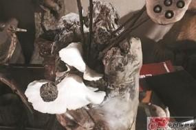 艺术根雕长出白蘑菇 会喷粉末吓坏众人