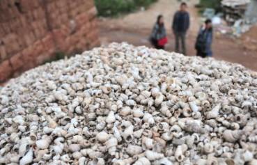 古人吃完螺蛳的壳堆积成山 最大贝丘遗址奇观
