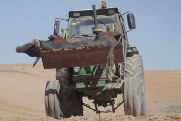 西班牙暴虐新玩法:开车斗牛