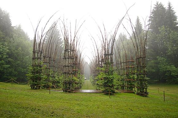 so cool!在幽深峡谷中,有一座自动生长的「树木大教堂」