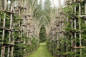 艺术家用树木搭建能生长的教堂