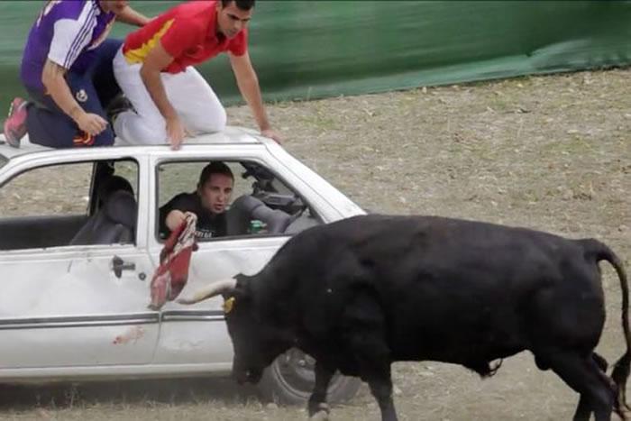 西班牙人把斗兽场搬到野外 驾四驱车赶牛用矛及石头攻击-趣闻巴士