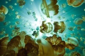 建筑师设计水母形生态屋 漂浮水面还能种菜养鱼