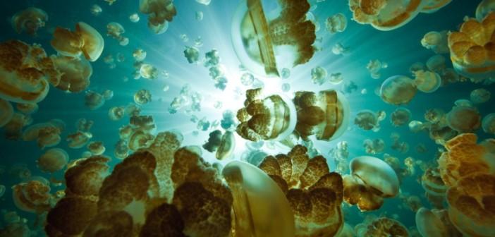 菲建筑师设计水母形生态小屋 盼取代水上贫民窟