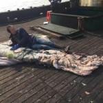 深海巨怪现身 渔民捞到鱿鱼王须长超20米