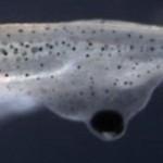 眼睛还能长在背上 生物拼接术将造出各种奇葩动物