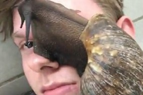小伙养超级大蜗牛放脸上耍酷