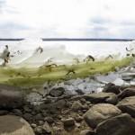美国一公园奇特景象 鱼都被冻在半空中