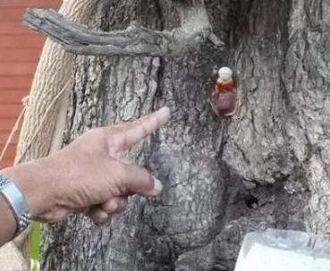 泰国一棵树长出一个蘑菇竟引得千人跪拜