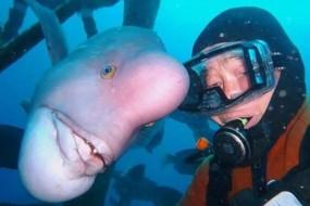 日本男子与一条海底怪鱼亲密无比