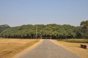 独木也能成林 250岁榕树占地1.4万平米