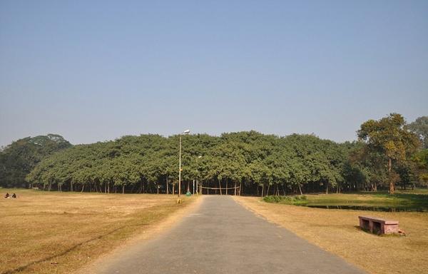 250岁超级榕树独木成林:树冠直径400米!-趣闻巴士