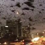 美高速公路铺天盖地黑鸟如灾难大片