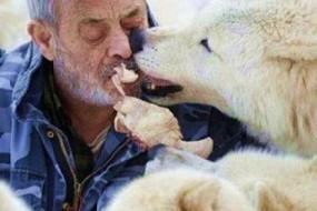 老人跟狼群生活40年成狼王