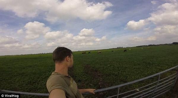 男子打嗝竟然引来13头牛强势围观 一脸懵-趣闻巴士