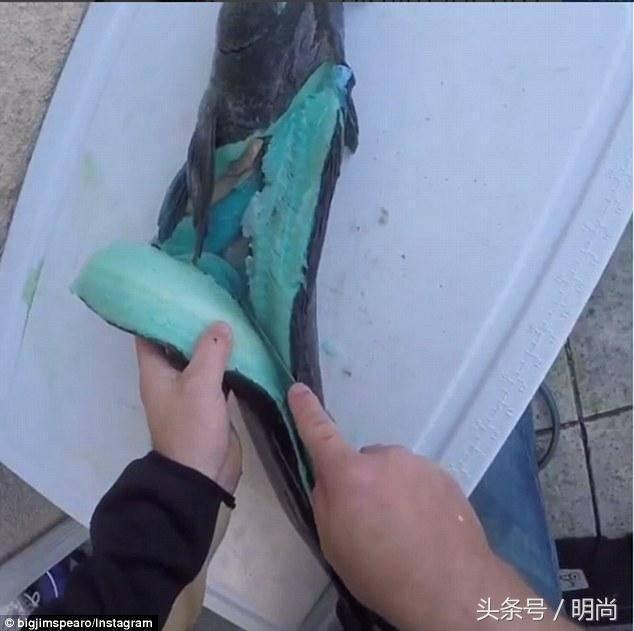 外国男子捕获珍稀龙趸 肉是蓝色的-趣闻巴士