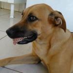 巴西一狗后院刨土  套假牙向主人炫耀