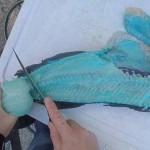 男子捕获珍稀鱼龙趸 肉为蓝颜色