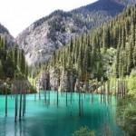 冰湖奇观 云杉在水中反向生长