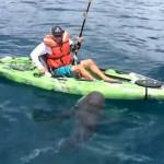 太倒霉 钓鱼男子被鲨鱼拉下水