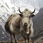 青藏高原将成全球最大国家公园
