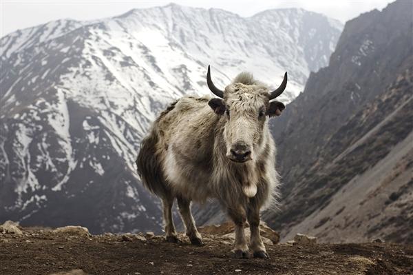 中国计划建世界最大国家公园:包含整个青藏高原-趣闻巴士