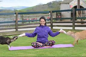 小羊陪伴做瑜伽 体验者称很舒服