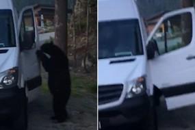 黑熊自己拉车门上车象老司机