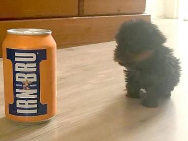 迷你小狗出生时比可乐罐还小