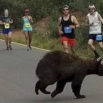 最刺激马拉松比赛 马路上出现了它