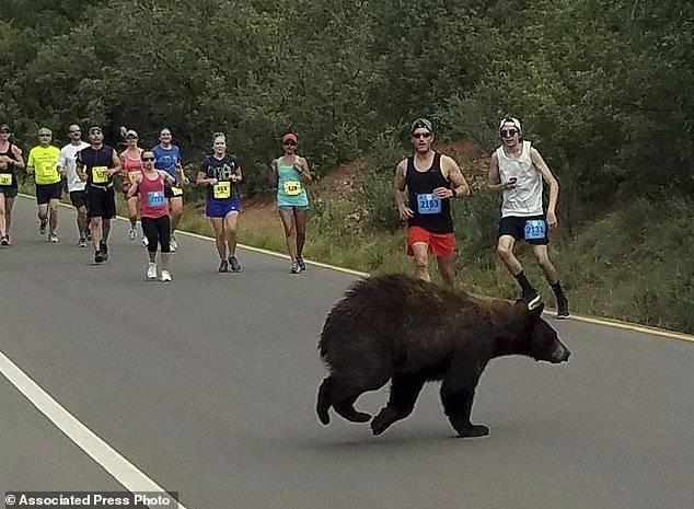 马拉松比赛进行中 突然马路中窜出一头熊(组图)-趣闻巴士